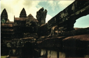 Macaque stalking the ruins of Angkor